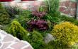 Променете пространството около себе си, озеленете своята градина