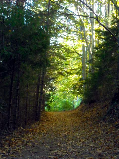 Златна есен на Витоша